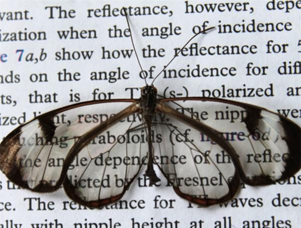 [ẢNH] Vẻ đẹp kỳ diệu trên đôi cánh của một số loài bướm - ảnh 11