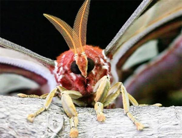[ẢNH] Vẻ đẹp kỳ diệu trên đôi cánh của một số loài bướm - ảnh 15