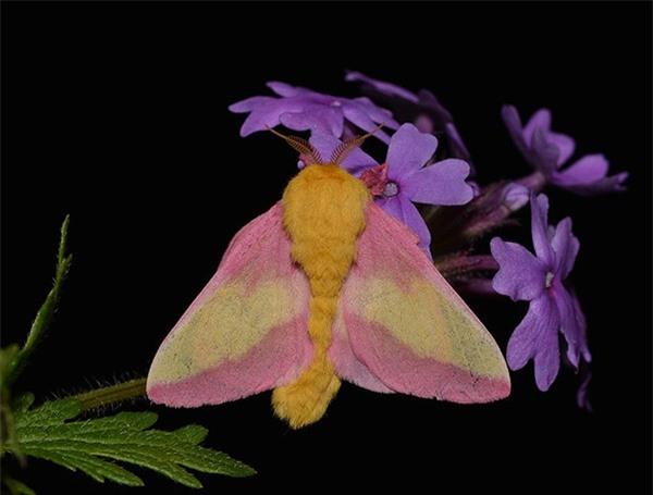 [ẢNH] Vẻ đẹp kỳ diệu trên đôi cánh của một số loài bướm - ảnh 17