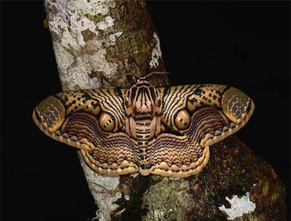 [ẢNH] Vẻ đẹp kỳ diệu trên đôi cánh của một số loài bướm - ảnh 2