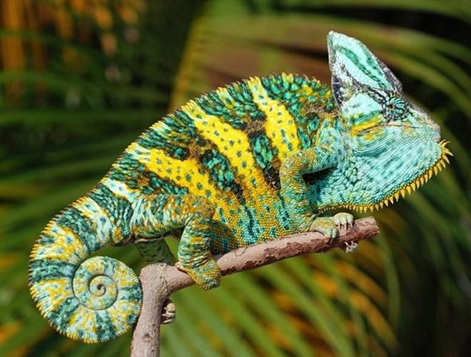 """Những loài động vật """"biến hóa"""" thần kỳ qua khả năng thay đổi màu sắc trên da, trên lông"""