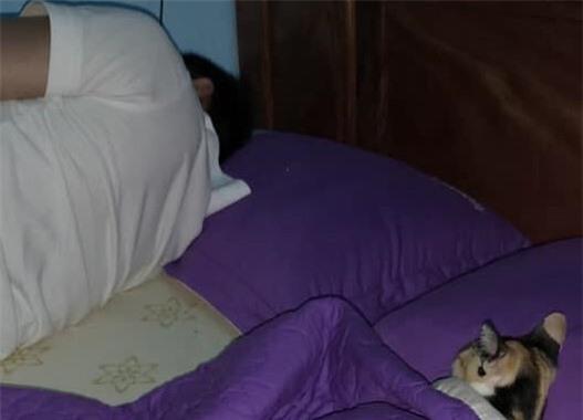 Con mèo nằm ngủ say sưa bên anh chồng của cô nàng.
