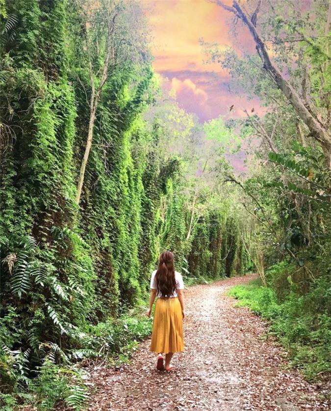 3 cánh rừng nguyên sinh miền Tây nổi tiếng trong giới xê dịch ảnh 12