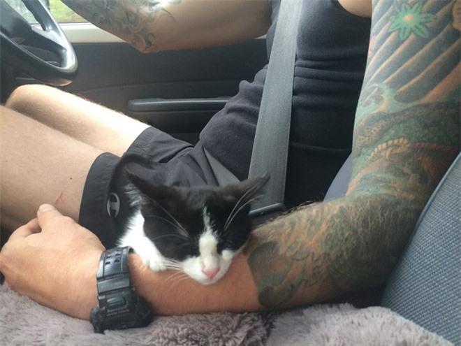 Chú mèo Shadow lúc nào cũng thích ngủ trong lòng của chồng cô nàng.