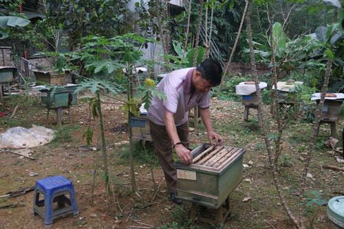 Hòa Bình: Làm giàu từ nuôi ong lấy mật