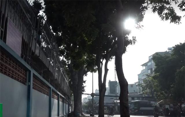Nhập nhằng việc quản lý cây xanh trong trường học - Ảnh 1.