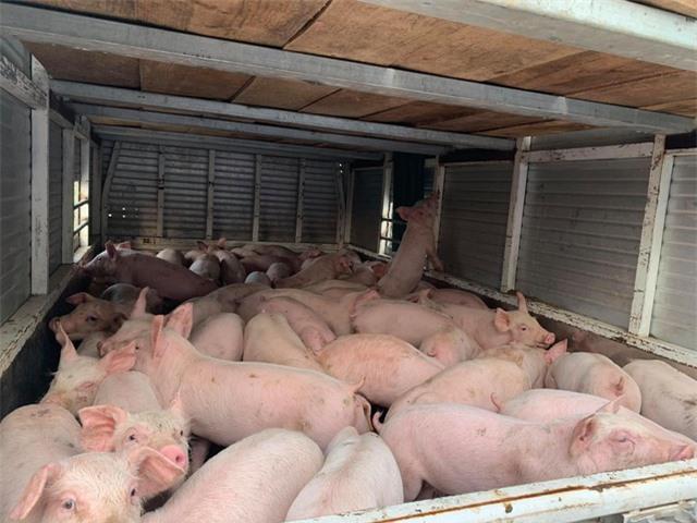 Thịt lợn siêu thị 300 nghìn đồng/kg, mua online giá chưa tới một nửa - 2