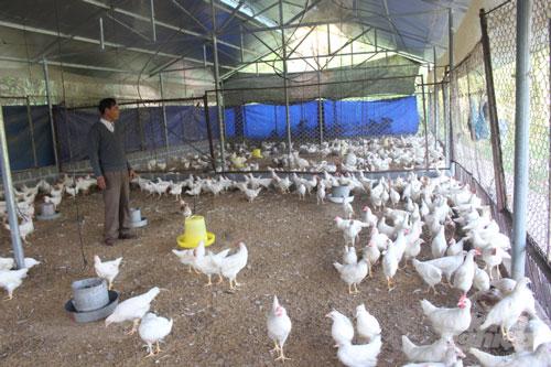 Ông Thèn Ngọc Minh, Chủ tịch UBND huyện Hoàng Su Phì khẳng định, các mô hình chăn nuôi gia súc, gia cầm theo hướng an toàn sinh học sau khi triển khai người chăn nuôi thấy được hiệu quả mà mô hình đem lại bởi lợi nhuận cao. Thời gian tới, chính quyền địa phương tiếp sẽ tục tuyên truyền, hướng dẫn các hộ dân chăn nuôi trên địa bàn ứng dụng mô hình sản xuất chăn nuôi an toàn sinh học; phối hợp với các ngành chức năng tổ chức các lớp tập huấn, chuyển giao khoa học công nghệ, các giải pháp mới trong chăn nuôi nhằm hạn chế ô nhiễm môi trường. Mục tiêu phấn đấu đến hết năm 2020 giá trị ngành chăn nuôi của huyện chiếm 24,48% tổng giá trị sản xuất nông, lâm nghiệp; đảm bảo tốc độ tăng trưởng hàng năm ổn định từ 3% trở lên đối với trâu, bò, dê và từ 6% trở lên đối với lợn, gia cầm.