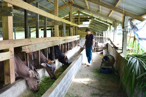 Bắc Kạn: Thu nhập hàng trăm triệu đồng từ chăn nuôi