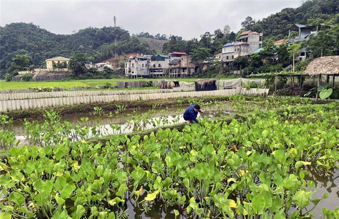 Hơn 1000m2 đất lúa được chuyển sang nuôi ốc