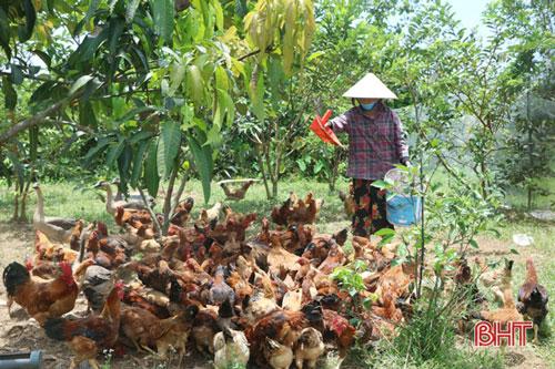 Tận dụng nguồn thức ăn tại chỗ, ông Giáo đã đầu tư nuôi thêm gà và vịt.