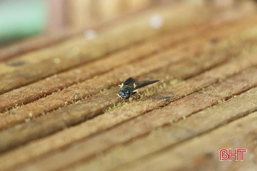 Khu vực nuôi ruồi bố, mẹ được ông Giáo đặt những thanh gỗ mỏng để cho ruồi đẻ trứng