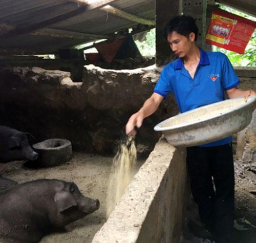 Anh Trường dự định tăng số lượng đàn lợn lên 100 con/lứa.