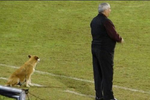 Ngộ nghĩnh chuyện chú chó đi lạc 'tình nguyện làm trợ lý huấn luyện'