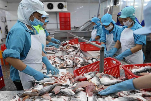 VASEP: Xuất khẩu cá tra còn khó khăn đến hết quý II (Ảnh Internet)