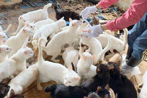 Gia đình ở Nhật Bản bị khởi tố vì... nuôi 238 con mèo