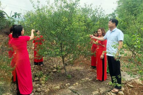 Anh Vũ Anh Tuấn, giới thiệu cho khách du lịch về vườn cây trồng mơ lông của gia đình.
