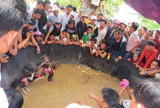 Chọi gà là địa điểm đông khách nhất trong mọi phiên chợ và hội làng. Ảnh: Lan Hương