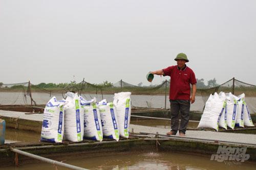 Nhờ nuôi cá lồng, ông Nguyễn Văn Tung thu lãi gần 1 tỉ đồng/năm. Ảnh: Mai Chiến.