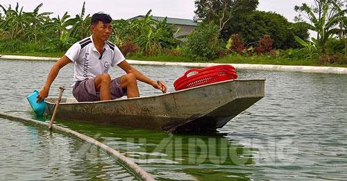 Mỗi năm, gia đình ông Nguyễn Duy Lựu thu lãi từ 200-300 triệu đồng