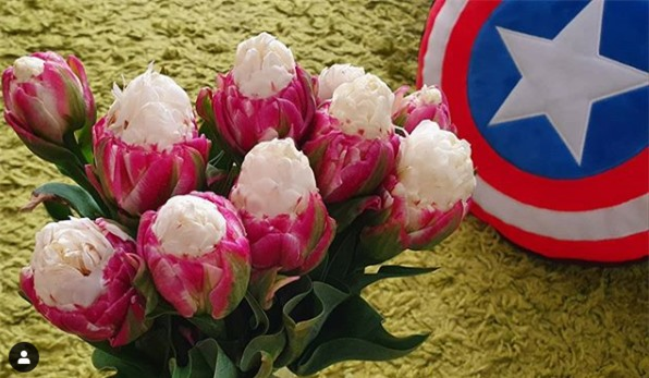 Ngỡ ngàng loài hoa lạ khi nở giống hệt cây kem, nhìn là muốn ăn