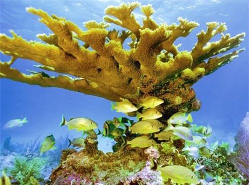 San hô là loài động vật sống thọ nhất Trái đất - 1