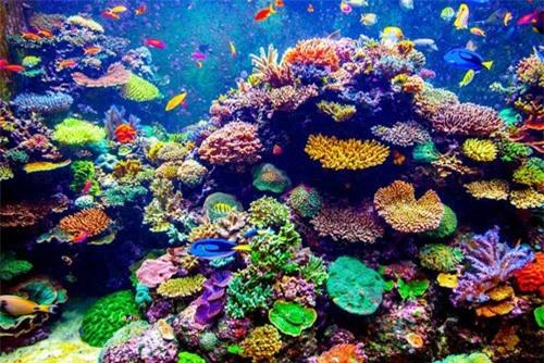 San hô là loài động vật sống thọ nhất Trái đất - 2