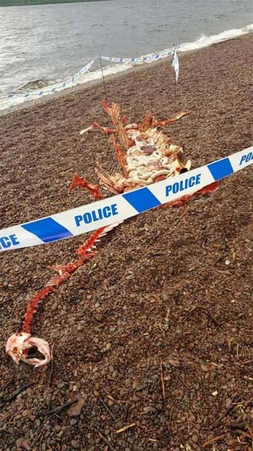 Xác động vật dạt vào bờ Loch Ness, nghi là quái vật huyền thoại - 3