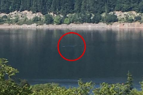 Quái vật Loch Ness thực chất là cá nheo khổng lồ?