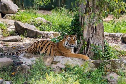 Sở thú bán hoang dã Vườn Xoài - thiên nhiên thu nhỏ đầy sống động - 1