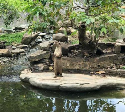 Sở thú bán hoang dã Vườn Xoài - thiên nhiên thu nhỏ đầy sống động - 10