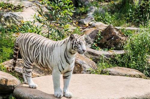 Sở thú bán hoang dã Vườn Xoài - thiên nhiên thu nhỏ đầy sống động - 2