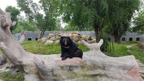Sở thú bán hoang dã Vườn Xoài - thiên nhiên thu nhỏ đầy sống động - 3