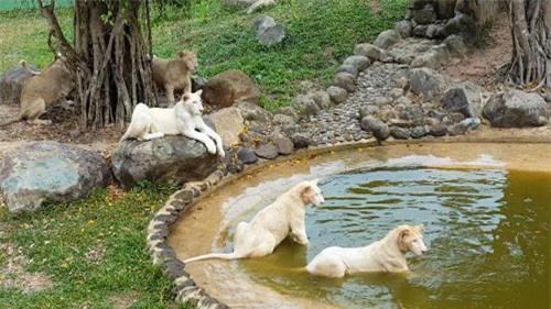 Sở thú bán hoang dã Vườn Xoài - thiên nhiên thu nhỏ đầy sống động - 4