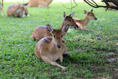 Sở thú bán hoang dã Vườn Xoài - thiên nhiên thu nhỏ đầy sống động - 6
