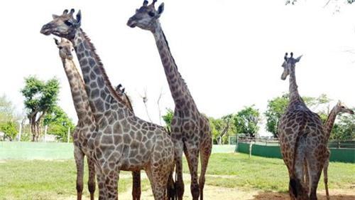 Sở thú bán hoang dã Vườn Xoài - thiên nhiên thu nhỏ đầy sống động - 7