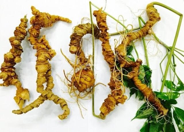 Với giá trị kinh tế cao, trồng sâm Ngọc Linh mở hướng sản xuất hiệu quả để phát triển kinh tế, xóa đói giảm nghèo (Ảnh: TL)