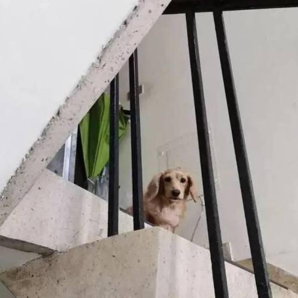 Ánh mắt thân thuộc của chú chó nhìn anh chàng shipper.