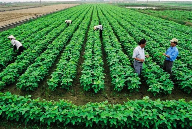 EVFTA tác động thế nào đến nồi cơm của người dân Việt? - Ảnh 7.