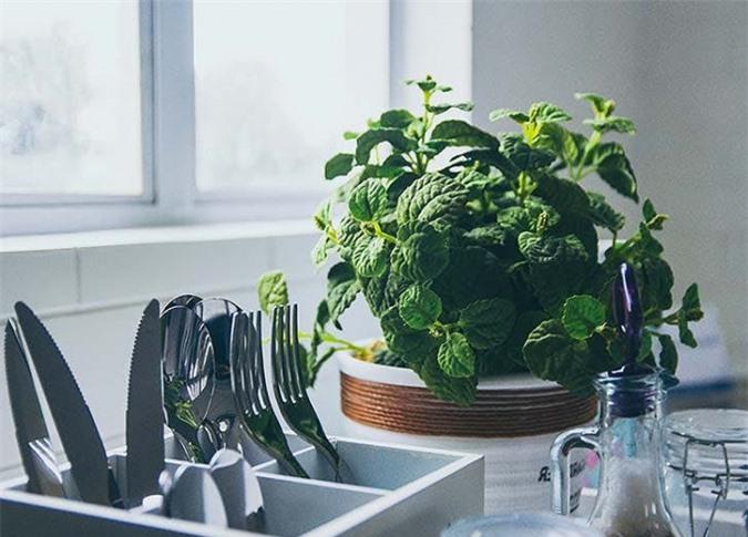 Hãy tự mình trồng 1 chậu bạc hà nhỏ xinh trong nhà hoặc bên cạnh bàn làm việc, hay để cây trên quầy bếp, cạnh chậu rửa bát, trên bàn ăn, để khi cần là có ngay, vừa an toàn, lại vừa tiện lợi. Nguồn: dotproperty.asia