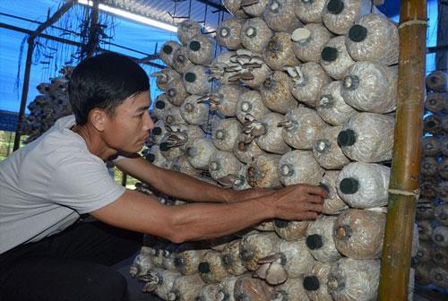 Mô hình trồng nấm bào ngư xám của HTX Nông nghiệp Tiên Hiệp đã mang lại thu nhập ổn định cho 4-6 lao động tại địa phương (Ảnh: TL)