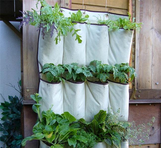 Tự trồng rau sạch mà không biết những mẹo làm vườn này thì quá phí - 10