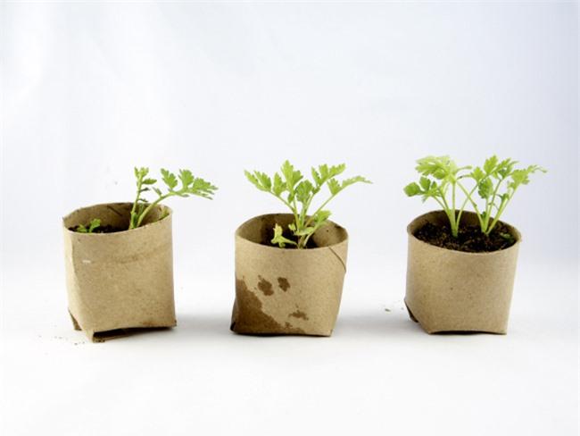 Tự trồng rau sạch mà không biết những mẹo làm vườn này thì quá phí - 2