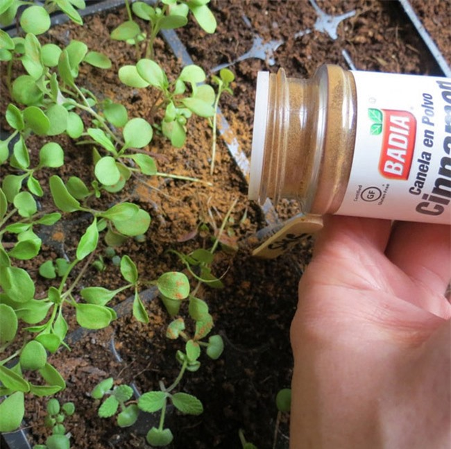 Tự trồng rau sạch mà không biết những mẹo làm vườn này thì quá phí - 3