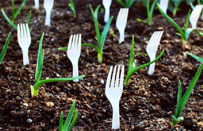 Tự trồng rau sạch mà không biết những mẹo làm vườn này thì quá phí - 8