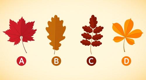 Bạn chọn chiếc lá nào
