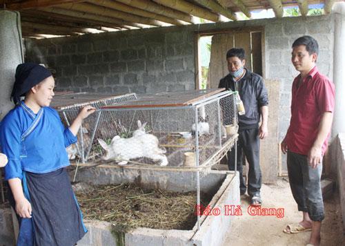 Mô hình nuôi thỏ của Bí thư Chi bộ thôn Đông Rìu, Lù Seo Trường.