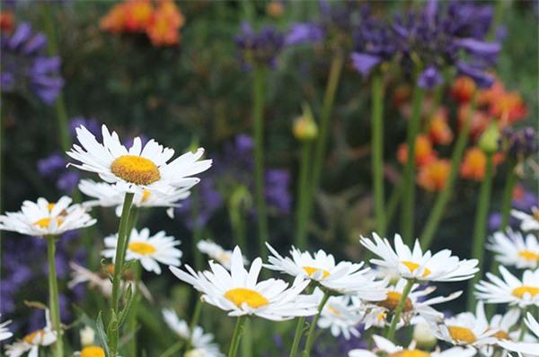 Cuộc đời bình yên bên vườn hoa trái đẹp như thiên đường của bà lão 83 tuổi - 5