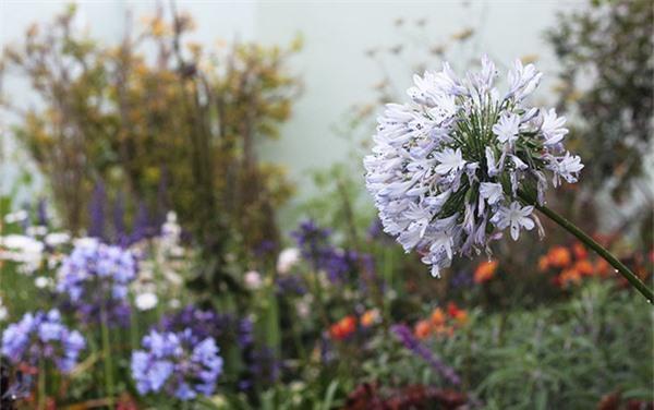 Cuộc đời bình yên bên vườn hoa trái đẹp như thiên đường của bà lão 83 tuổi - 6