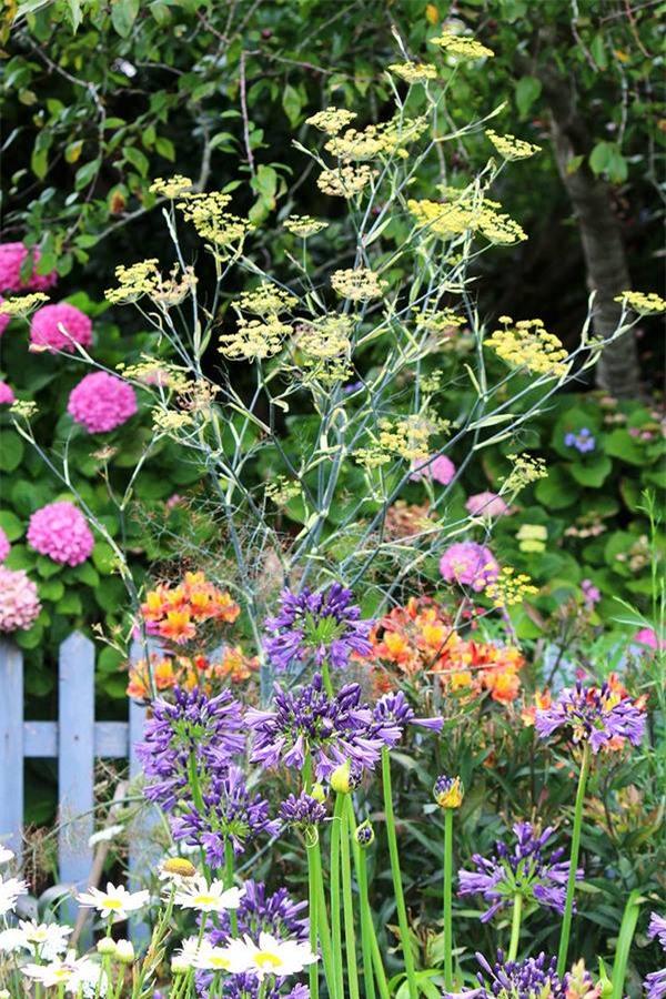 Cuộc đời bình yên bên vườn hoa trái đẹp như thiên đường của bà lão 83 tuổi - 8